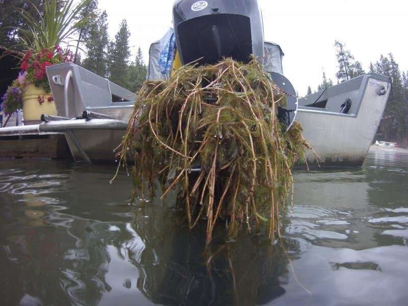 Boat prop with milfoil